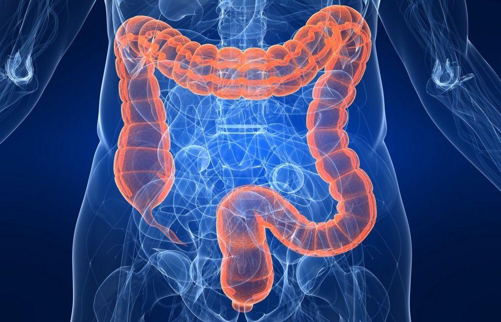 картинка паразитов человека